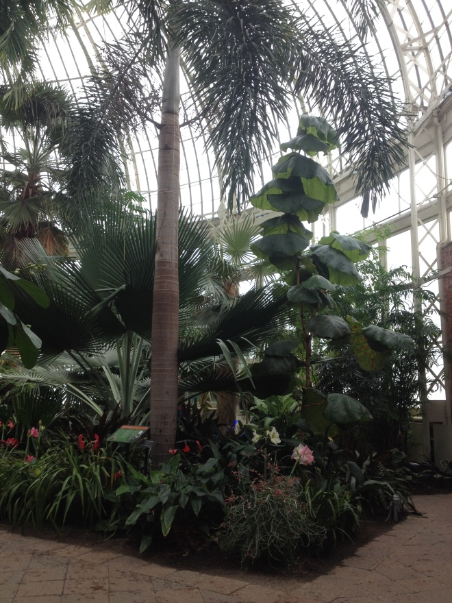 Buffalo_Botanical_Gardens